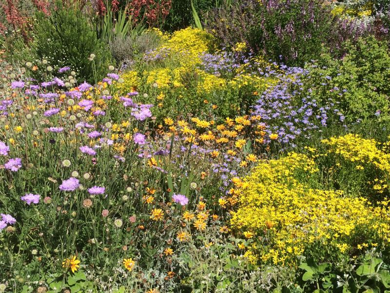 Fynbos_Garten